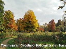 Toamnă-În-Grădina-Botanică-Din-Bucureşti-1024X576